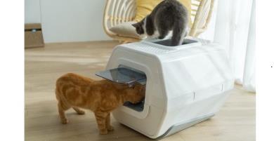 Chiếc hộp nhỏ LuluPet: Thiết bị cho phép theo dõi tình trạng sức khỏe của mèo